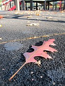A beautiful red leaf fallen on a crisp Fall day in a Brooklyn, NY playground