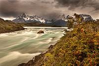 Rainstorm engulfs Cuernos del Paine peaks, Lago Pehoe rapids, ´Seven shirts - siete camisas colorado´ in flower Escallonia rubra , Parque Nacional Tor...