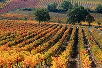 Autumnal vineyards of the Luberon, Vaucluse, Provence-Alpes-Côte d´Azur, France