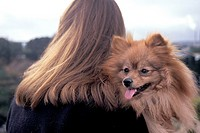 Very hairy composition of the back of a girl´s windswept hair and long haired pekinese dog looking over her shoulder