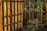 Traditional Japanese bamboo fence tied with black cord in a garden