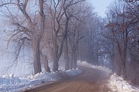 Farm road on a foggy winter morning with snow and weeping willow trees