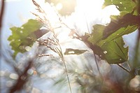 Grasses and leaves in front of a lake in which the bright summer sun is reflected