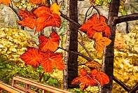 This abstract features gorgeous autumn leaves scenic quilted on fabric for an unusual fall foliage shot