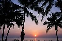 Coconut picker in Goa, India