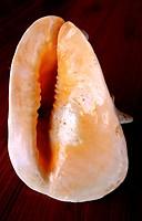 Africa, Madagascar, Toliara Region Tulear, Shells
