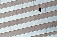 Hong Kong: bird and skyscraper in Central