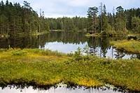 Sweden - Finland wildlife 2
