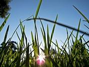 Grass with sunlight filtering through