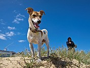 Small dog on beach with owner in the background