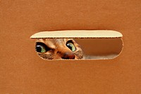 Cat looking through a hole in a box