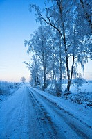 Frosted trees and icy road in winter, Lower Saxony, Germany, Europe