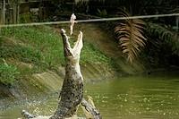 Jong´s Crocodile Farm, Kuching Sarawak