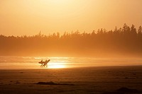 Surfers on a beach, Vancouver Island, British Columbia, Canada