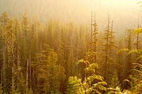 Tiupana inlet  Nootka Sound  Vancouver island  British Columbia  Canada