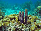Underwater landscape with sponges in Bonaire, Dutch Antilles, Caribbean sea.