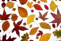 Europe, D, Germany, Brandenburg, Leaf, Leaves, foliage