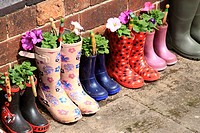 Flowers planted in wellington boots, Bewdley, Worcestershire, England, Europe