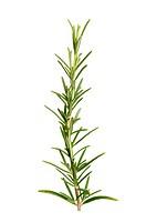 Rosemary leaves herb