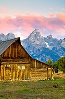 Pink clouds at dawn over mountains, old wooden barn, and trees in Fall, along Mormon Row, Grand Teton National Park, Wyoming