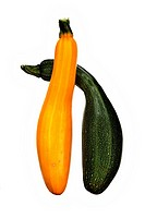 A pair of green and yellow homegrown courgettes isolated against a white background.