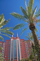 Looking up towards palm trees at the Hilton Grand Vacations Club at the Flamingo in Las Vegas, Nevada, United States