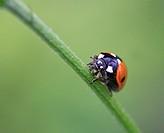 Ladybird, Worcestershire, England, Europe