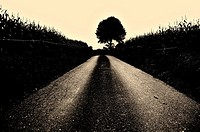 Lone tree in a way, Llanes, Asturias, Spain. Sepia image.