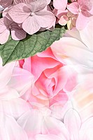 Romantic and soft artistic background with flowers
