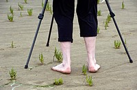 Legs of a man in the Wadden Sea and tripod, common glasswort, Salicornia euopaea, Eiderstedt Peninsula, Schleswig-Holstein, Germany