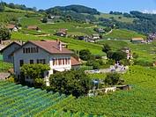 terrace of lavaux,valais,swiss