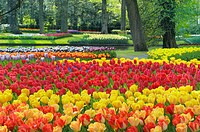 Formal garden design with Springtime flowerbeds of Tulips, Keukenhof Gardens, Lisse, Holland, Netherlands