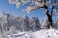 Winter scenery at Skalnata, Male Karpaty, Slovakia