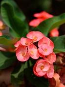 Red cactus flower.