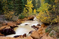 Yellow waters from local mining adds to the fall color foliage in Colorado high country