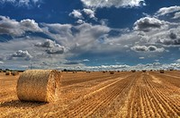 Field of Wheat after harvesting in Leicestershire, England, UK