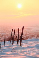 Vineyards near Modra Slovakia in early morning sun