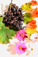 still life with black grapes