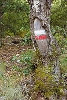 GR sign in a tree in La Font Roja