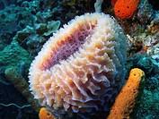 Sponge in the Caribbean sea around Bonaire