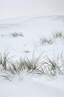 Dunes and grasses covered with snow.