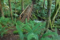footbridge on Surge Narrows Trail, Quadra Island, British Columbia, Canada
