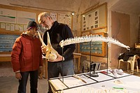 Gallipoli Italy: scientist Dr. Giorgio Cataldini showing a dolphin skeleton to a student