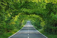 Tree-lined country road, Germany, Mecklenburg-Vorpommern, Island of Ruegen