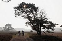 Leersumse veld, The Netherlands