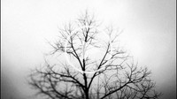 Timelapse of a tree with overcast