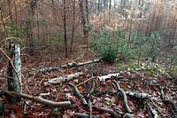 Autumn colors and dead trees in forest, Estate Den Treek, Leusden, The Netherlands