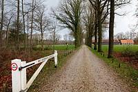 Avenue on nature reserve Klein Bylaerd, Het Utrechts Landschap, The Netherlands