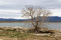 Dead tree, Comunidad valenciana, Spain