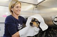 Woman grooming shepherd mix in van, Thousand Oaks, California, USA